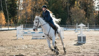 Photo of Heartland Season 11 Episode 13 Review