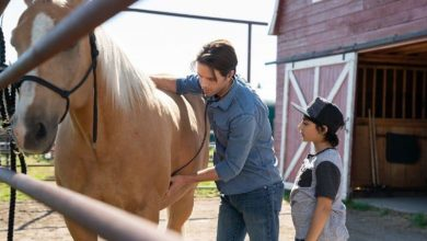 Photo of Heartland Season 12 Episode 5 Review