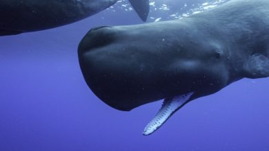 Secrets Of The Whales on Disney+ Review